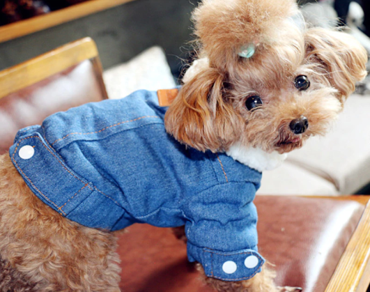 denimdoggy3